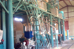 50 TPD Maize Flour Plant In Zambia